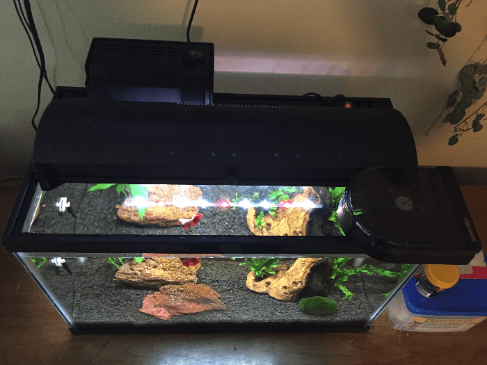 Fish Mate 14 Automatic Fish Feeder on Betta Tank