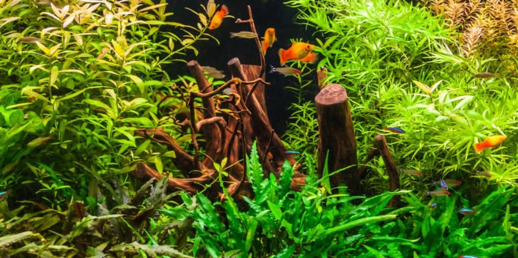 fast growing plants in aquarium