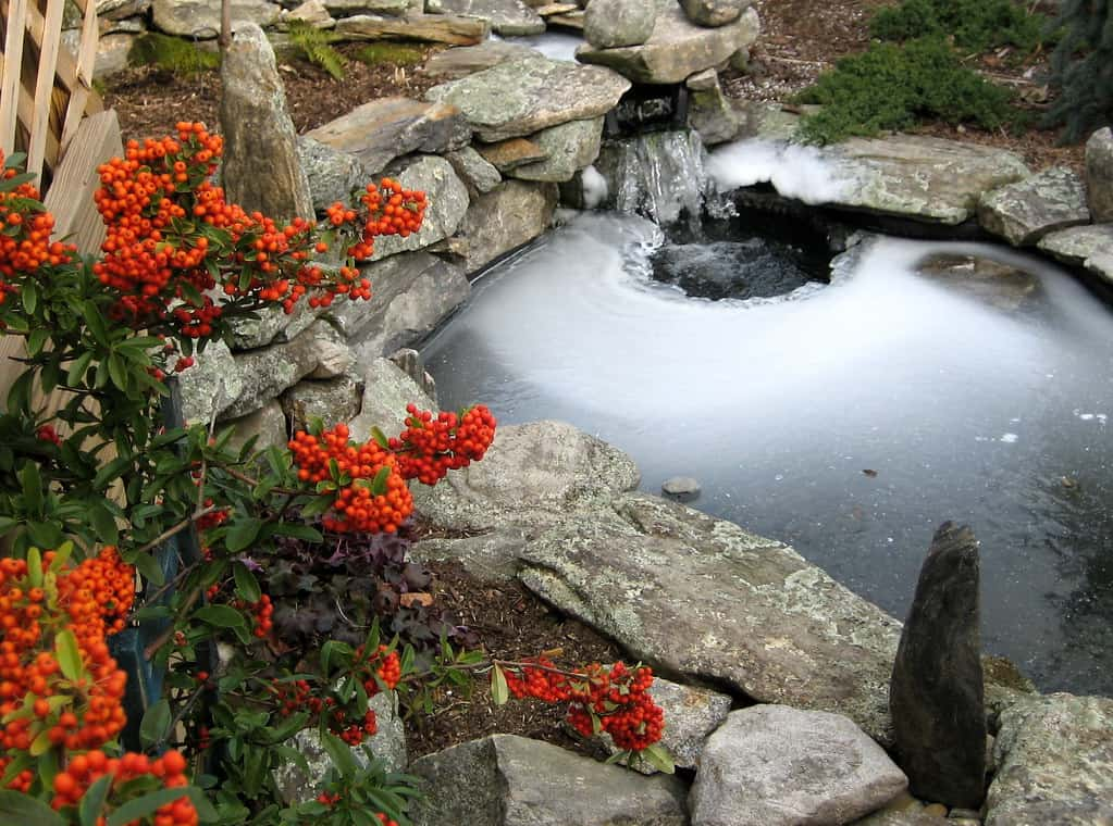 small iced covered koi pond