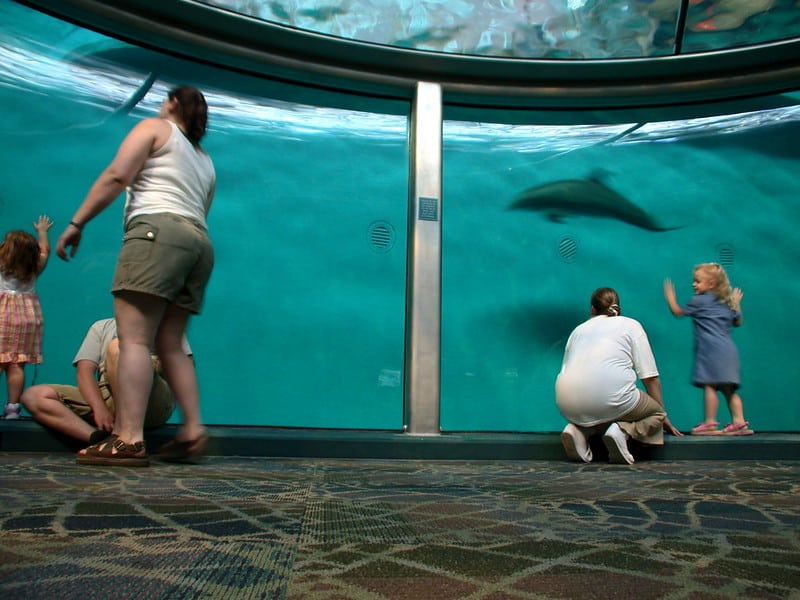 People viewing dolphins in an aqurium