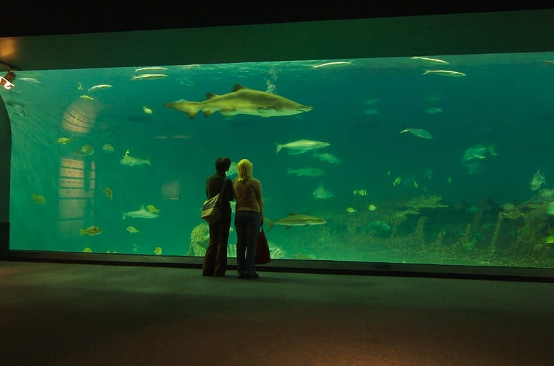 People standing in front of the aquarium with sharks and fishs