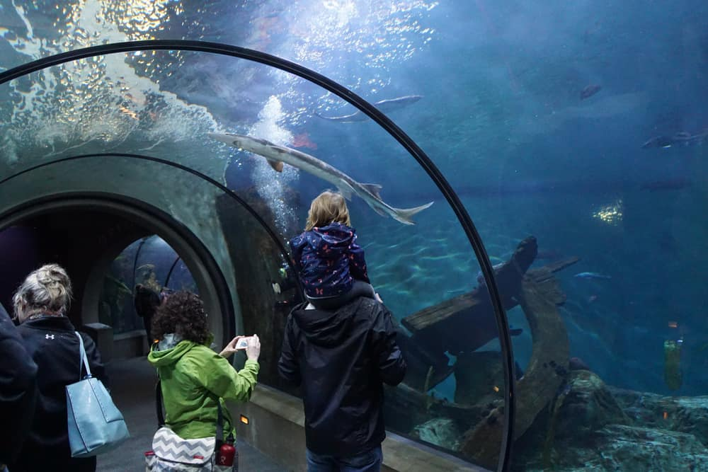 Tourists explore sealife underwater from a glass tunnel,  Newport, Oregon